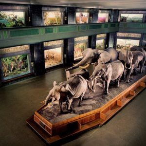 Akeley Hall of African Mammals, American Museum of Natural History, New York.
